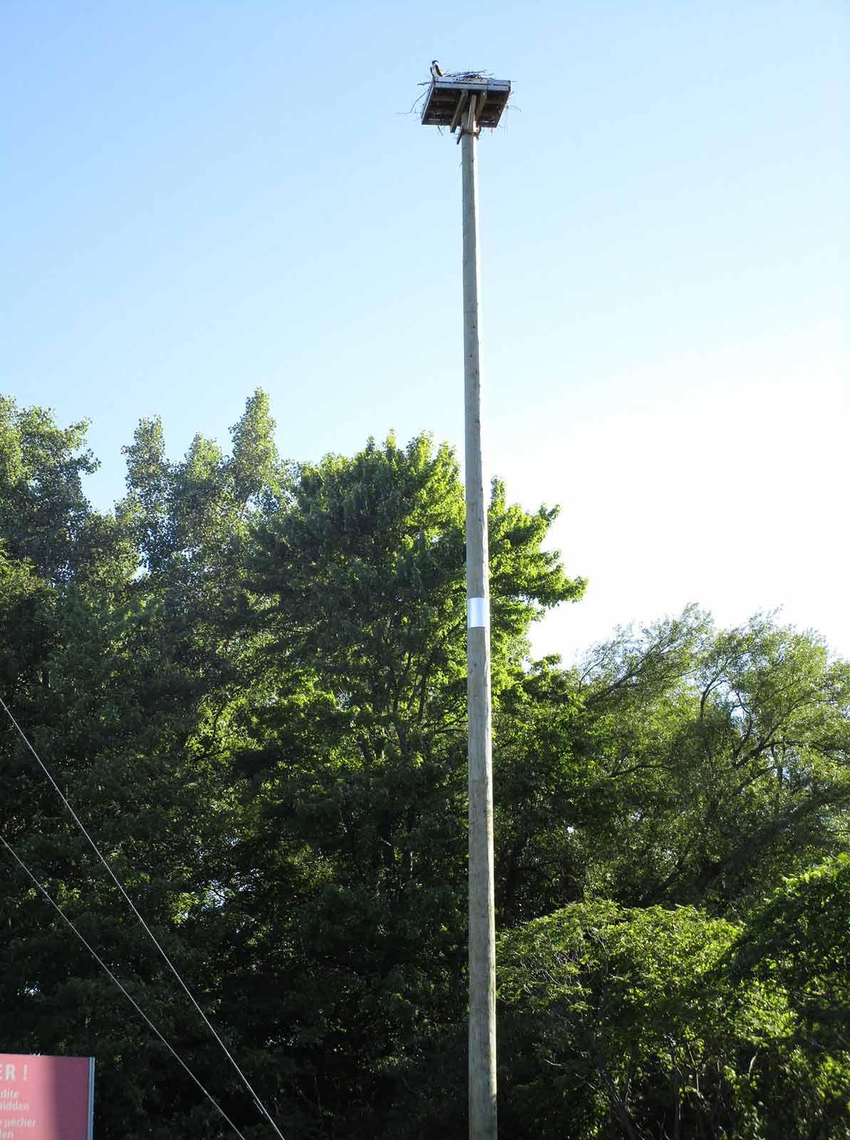 installation des poteaux pour la préservation des balbuzards par Laporte et Fils